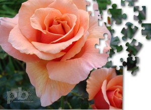 Rose_puzzle