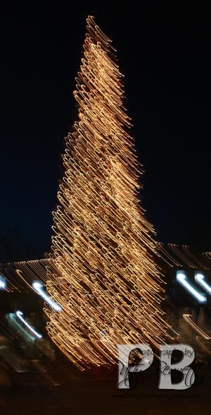 Night_tree